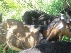 bolivar noira
