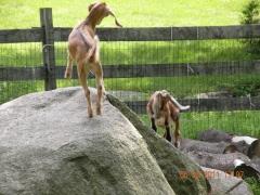 Tina and Bambi